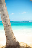 Palm tree trunk and beautiful caribbean sea as background Royalty Free Stock Image