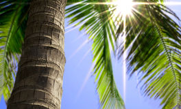 Palm tree trunk close up. Palm tree trunk and summer beach view Stock Image