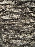 Palm tree trunk close up stock photography