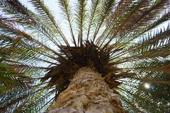 Palm tree trunk close up Stock Photo