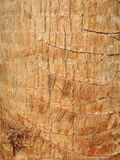 Palm tree trunk closeup Stock Photography