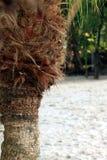 Palm tree trunk closeup Royalty Free Stock Photography
