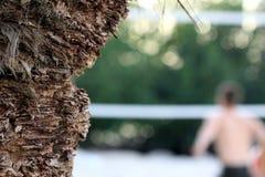 Palm tree trunk closeup Stock Photos