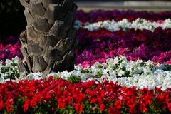 Palm tree trunk in a colorful flower bed Royalty Free Stock Photos