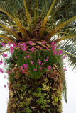 Palm tree trunk covered with flowers Royalty Free Stock Image