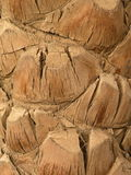 Palm tree trunk Stock Photo