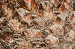 Palm tree trunk detail Stock Images