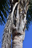 Palm tree trunk detail Stock Photo