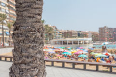 Palm tree trunk in front of blur Mediterranean beach Stock Images