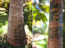 Palm tree trunk Stock Image