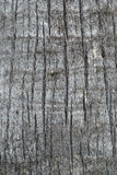 Palm tree trunk texture. Close up of a palm tree trunk texture royalty free stock photography