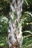 Palm tree trunk Royalty Free Stock Images