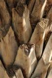 Palm tree trunk texture. Under the sun Stock Photos