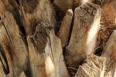 Palm tree trunk texture. Under the sun Stock Images