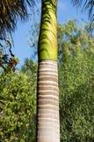 Palm tree trunk in tropical garden on Fuerteventura Stock Photo