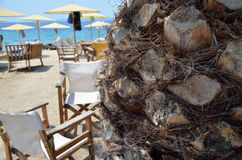 Palm tree trunk and wooden chairs Stock Photos