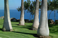 Palm Tree Trunks Royalty Free Stock Image