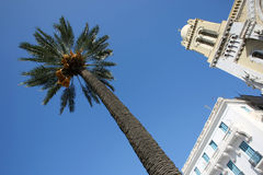 Palm tree in Tunis. Avenue Habib Bourguiba, palm tree in front of Cathedral of St Vincent de Paul in Tunis,Tunisia Royalty Free Stock Photo