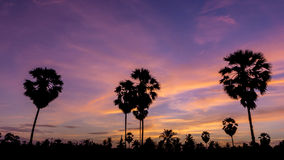 Palm tree on twilight Royalty Free Stock Photography