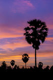 Palm tree on twilight time Royalty Free Stock Photography
