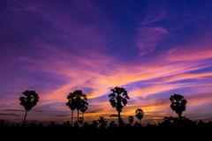 Palm tree on twilight time Royalty Free Stock Photos