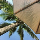 Palm tree and umbrella. Sunbather's point of view in a tropical setting Royalty Free Stock Photography
