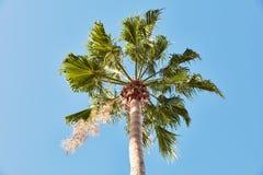 Palm tree under blue sky Stock Photo