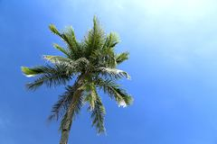 Palm tree under bue sky. Palm tree under bright bue sky stock photo