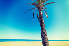 Palm tree under a clear sky. In Sardinia, Italy Stock Photography