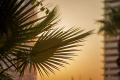 Palm tree under the sunset Stock Photos