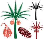 Palm tree. Vector illustration (EPS 10 Royalty Free Stock Photography