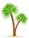 Palm tree vector illustration Royalty Free Stock Photography