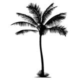 Palm tree vector silhouette illustration Royalty Free Stock Images