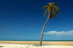 Palm Tree View. A view off the south east coast of Koh Samui with a palm tree royalty free stock photos