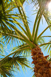 Palm tree view from bottom Stock Photography
