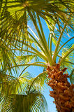 Palm tree view from bottom, sun's rays shine Stock Photos