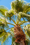 Palm tree view from bottom, sun's rays shine through branches Stock Photos