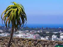 Palm tree and view from Castello Aragonese at Ischia Island, Italy. Enjoying the scenery from top of the ancient Aragonese Castle Royalty Free Stock Image