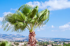 Palm tree view. Palm tree with a view on island in background Stock Image