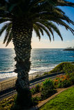 Palm tree and view of the Pacific Ocean, at Heisler Park  Stock Image