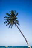 Palm tree and view of the Sea Royalty Free Stock Photo