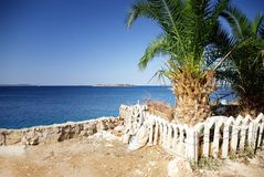 Palm tree and view of the warm and clean sea, Croatia Dalmatia Royalty Free Stock Photos