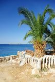 Palm tree and view of the warm and clean sea, Croatia Dalmatia Royalty Free Stock Photography