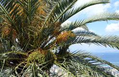 Palm tree view royalty free stock photos