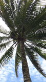Palm Tree Viewed from Below Royalty Free Stock Photography