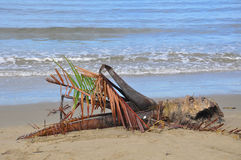 Palm tree washed up on borneo shore. New trees for the rain forest drifting around borneo coast after tropical storm royalty free stock photography