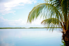 Palm Tree by Water stock photography