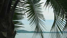 Palm tree on water background. Sky and lake Maggiore stock footage