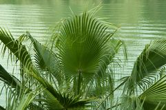 Palm tree with the water. Background of the Guadalquivir stock photos