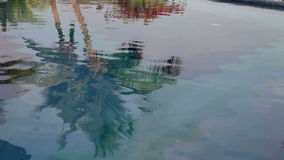 Palm tree water reflection stock footage